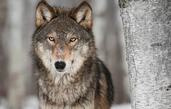 The theme of the UMB Private Wealth Management webinar Q3 2017 is the big bad wolf